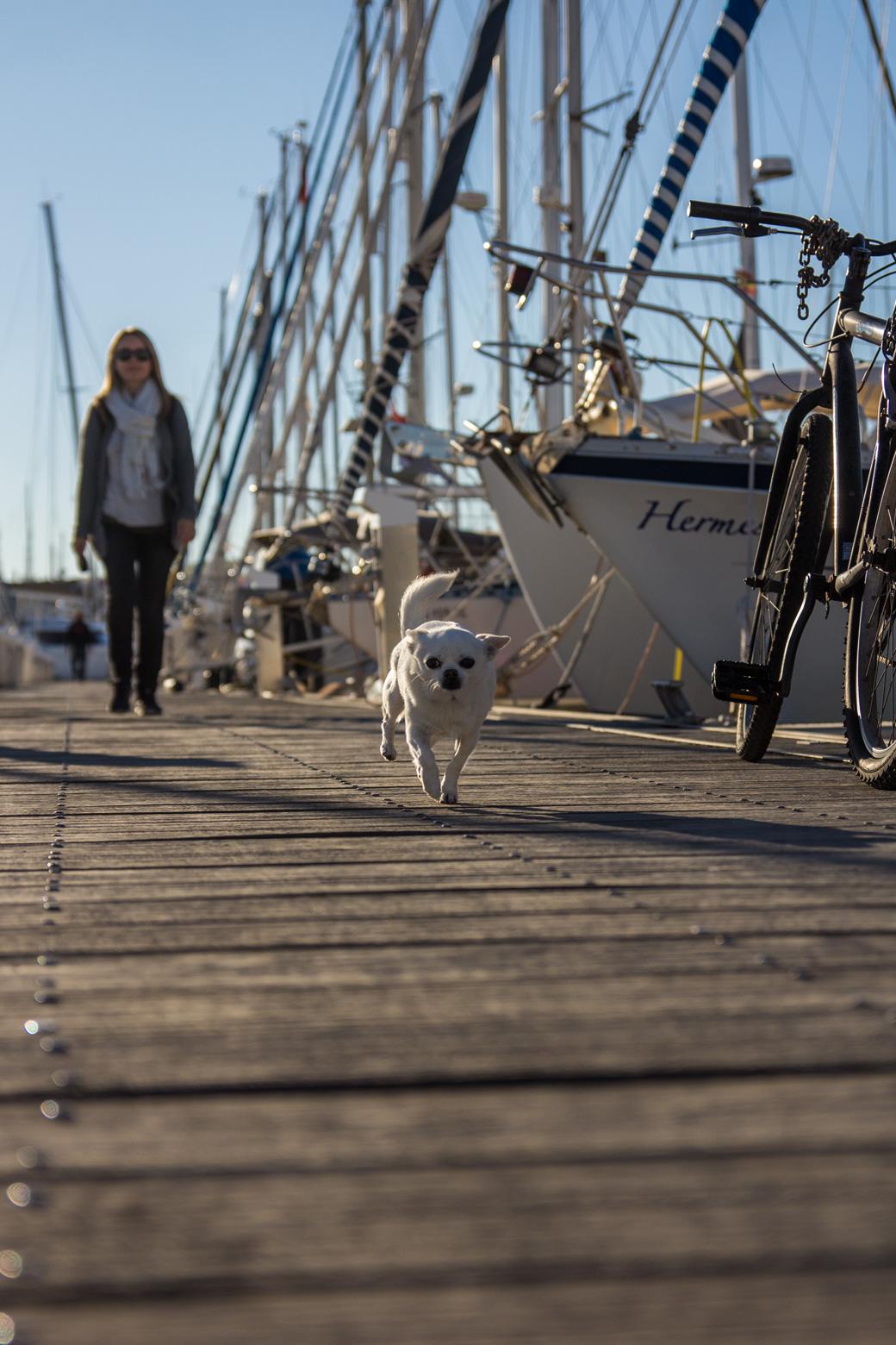 Alex und Millau, der kleine Chihuahua liebt Heizlüfter und warme Sommertage.