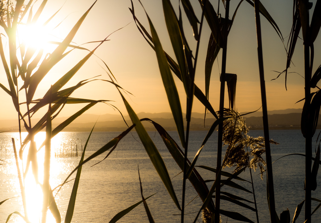 La Albufera – das ist der größte See Spaniens und eines der bedeutendsten Feuchtbiotope der iberischen Halbinsel. Das Naturschutzgebiet wird von einzigartigen Wasservögeln als Überwinterung genutzt. Die reichhaltigen Gewässer haben seit jeher den Fischern und Reisbauern als Lebensunterhalt gedient. Hier wird auch der Reis für die Paella angebaut.