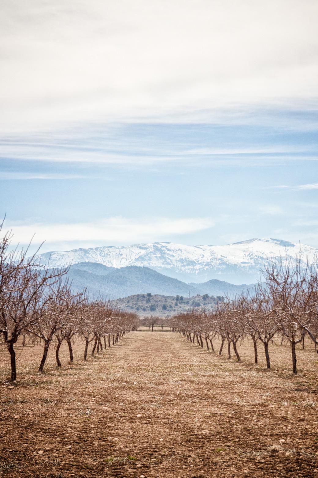 Ein Wahnsinnsblick! Die schneebehangenen Berge der Sierra Nevada und die Mandelfelder am Fuße.