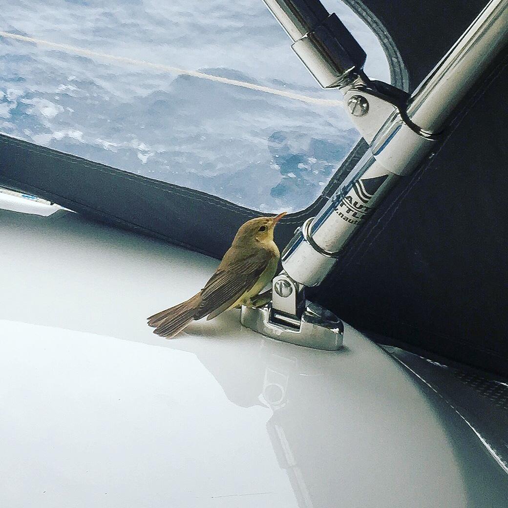 Kleiner Begleiter auf dem Wasser, ein Vogel.