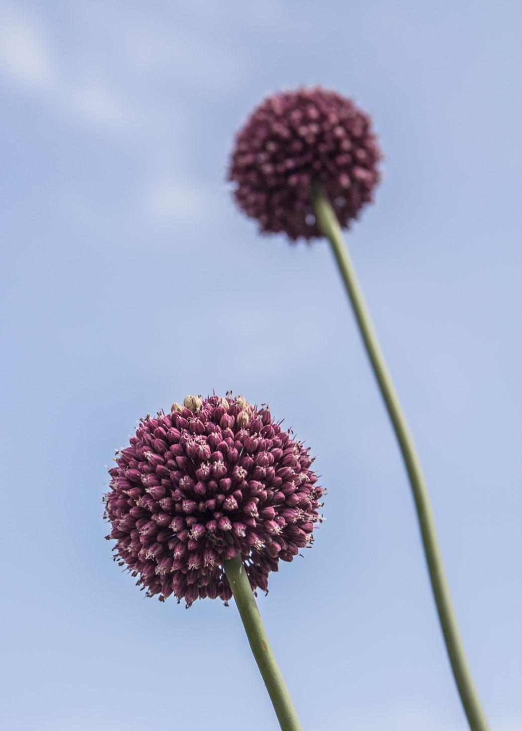 ...finden hübsche Pflanzen...